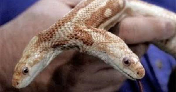 mutated.snake